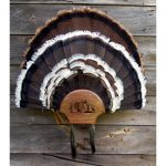 Double-Fan-Beard-Cherry-lg-0022