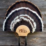 Double-Fan-Beard-Oak-0022