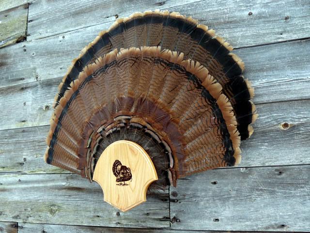 Double Fan Display Turkey Fan Man Products